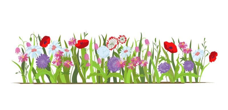 flowerbed Stellen Sie von den wilden Wald- und Gartenblumen ein junge gelbe Blume gegen weißen Hintergrund Flaches Vektorblumen-I vektor abbildung