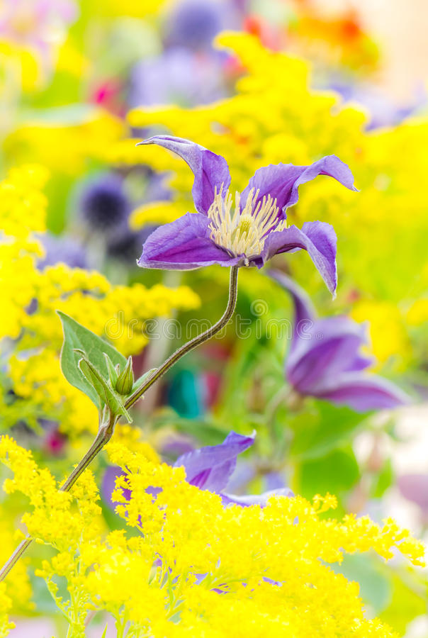 Flowerbed with various summer flowers royalty free stock photo