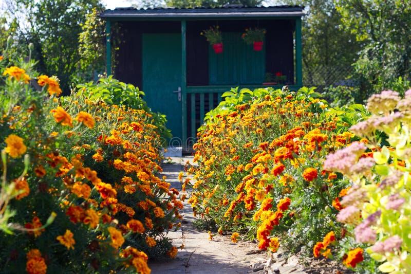 Flowerbed w ogródzie zdjęcia royalty free