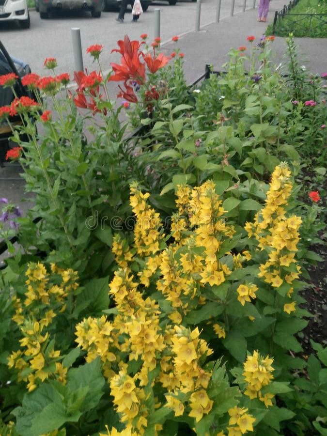 Flowerbed with Yellow red and other flowers. Beauty, city stock photos