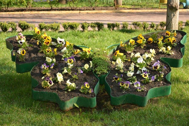 Flowerbed z pansies obraz royalty free
