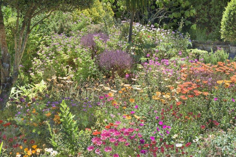 Flowerbeds Abbey Garden, Tresco royalty free stock image