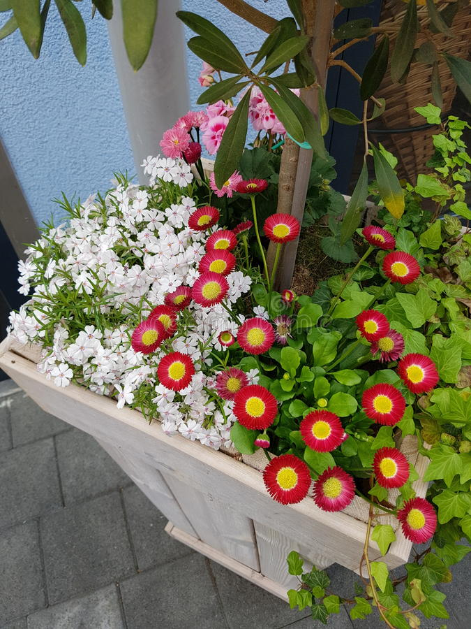 Flowerbox doux images libres de droits