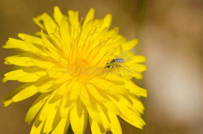 Flowerbug fotos de stock royalty free