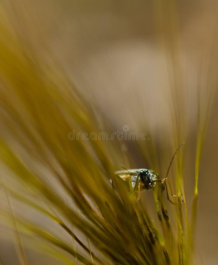 Flowerbug foto de stock