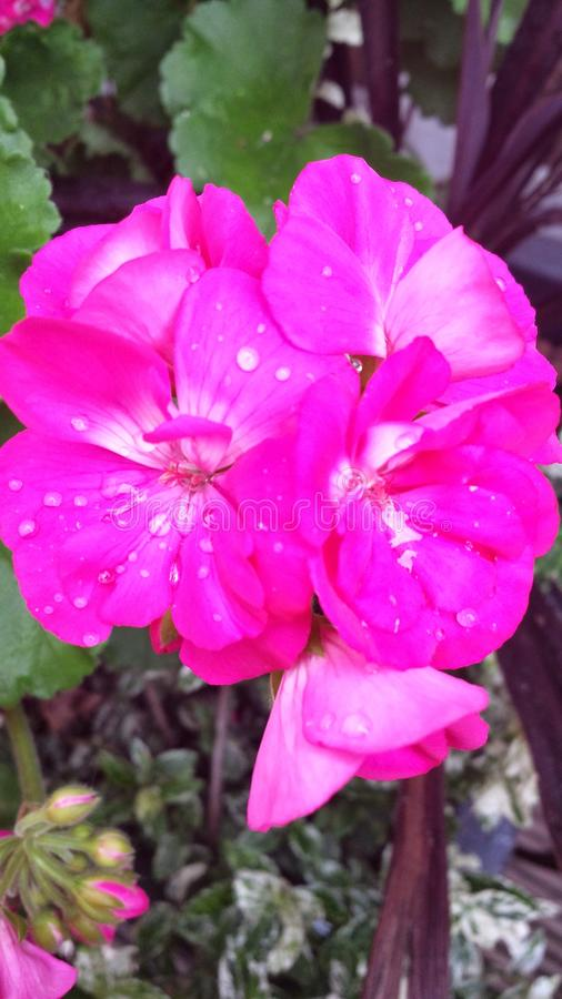 Flowerburst fotografía de archivo libre de regalías