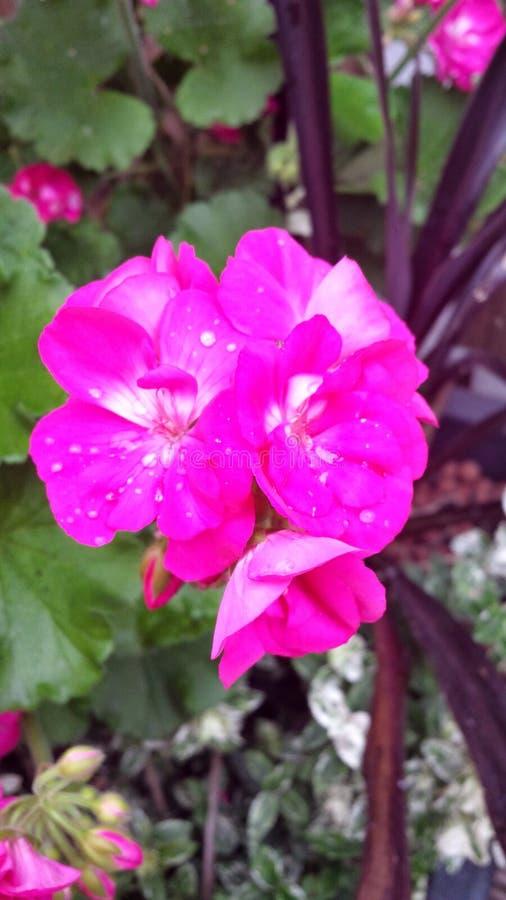 Flowerburst fotos de archivo