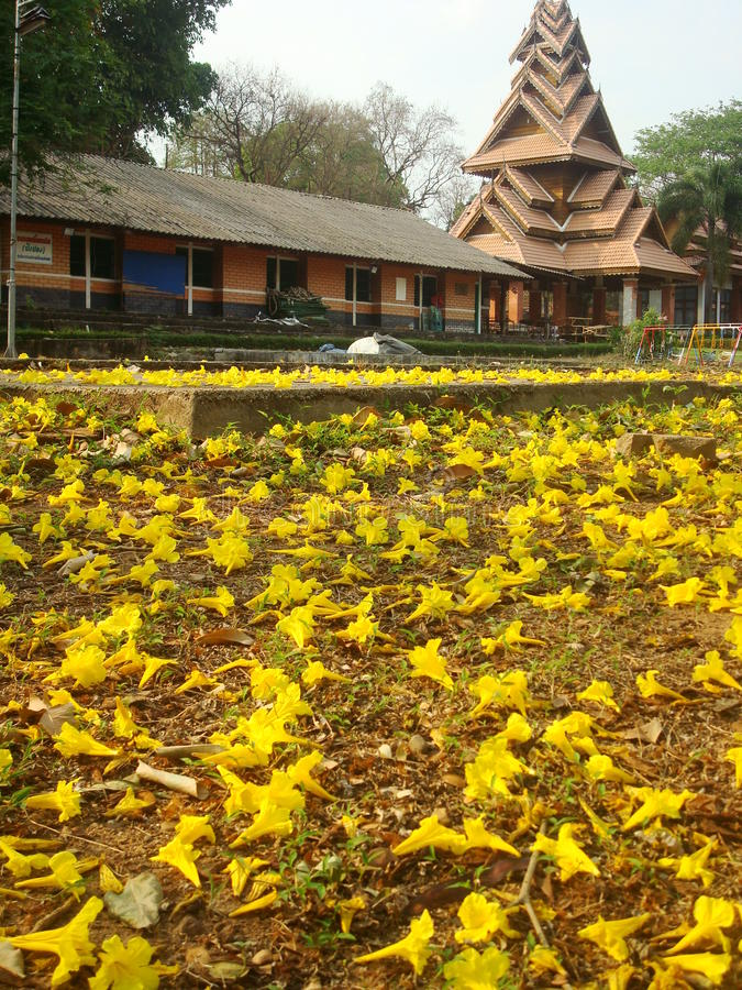 Flowere bakgrund royaltyfria bilder