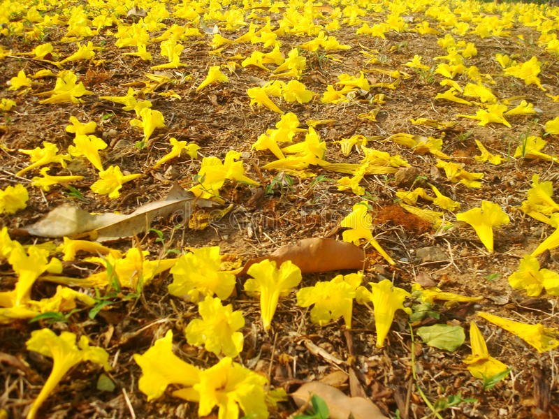 Flowereachtergrond stock foto's