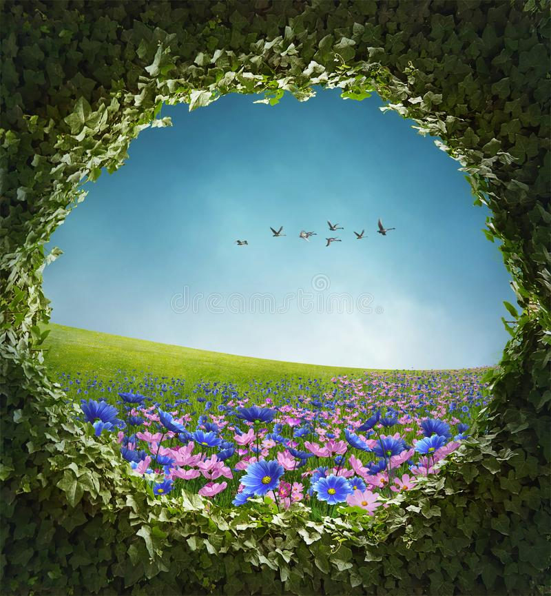 Flowered field and ivy frame. stock images