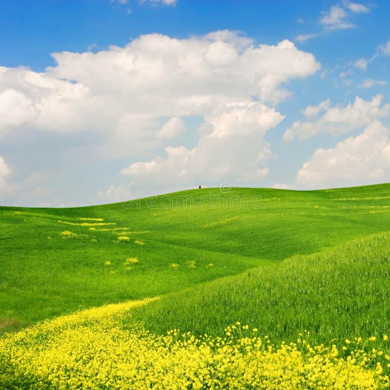 Download Flowered Landscape stock photo. Image of bright, landscape - 2681914