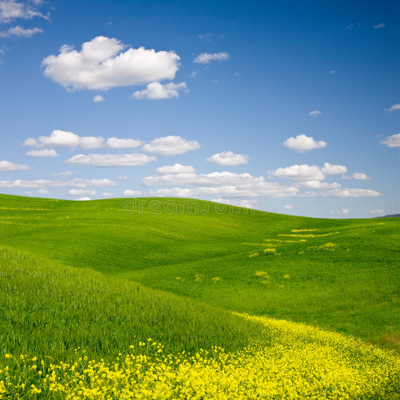 Download Flowered Landscape Stock Photography - Image: 5799552