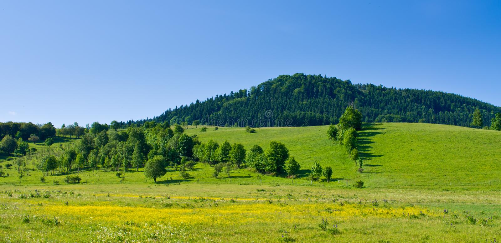 Download Flowered meadow and hill stock photo. Image of grassland - 26177402