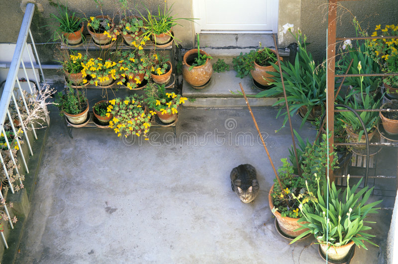 Flowered Terrace with curious cat royalty free stock photo