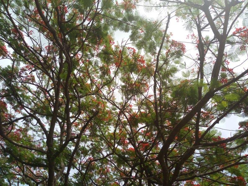Flowered Tree stock photo