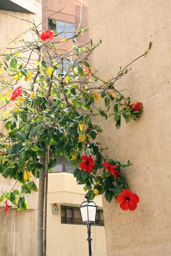 Flowered wall stock photography