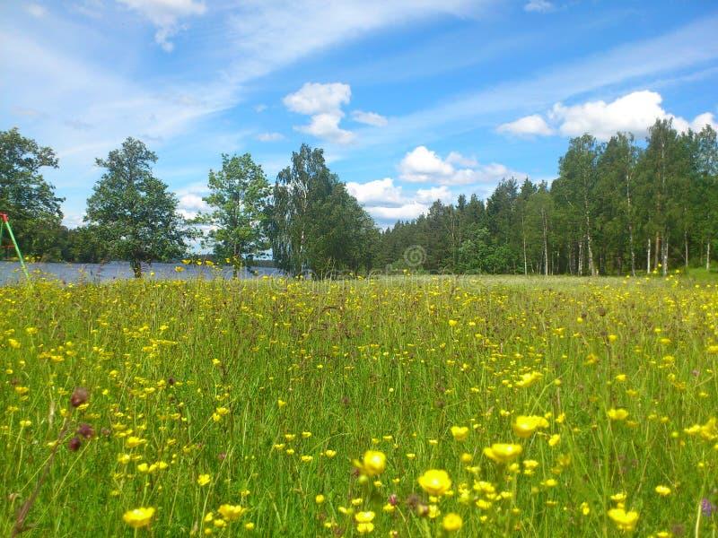 Flowerfield和湖 免版税库存图片