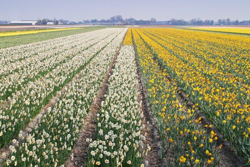Flowerfield image libre de droits