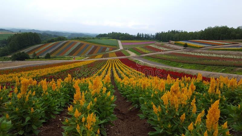 Flowerfield photo libre de droits