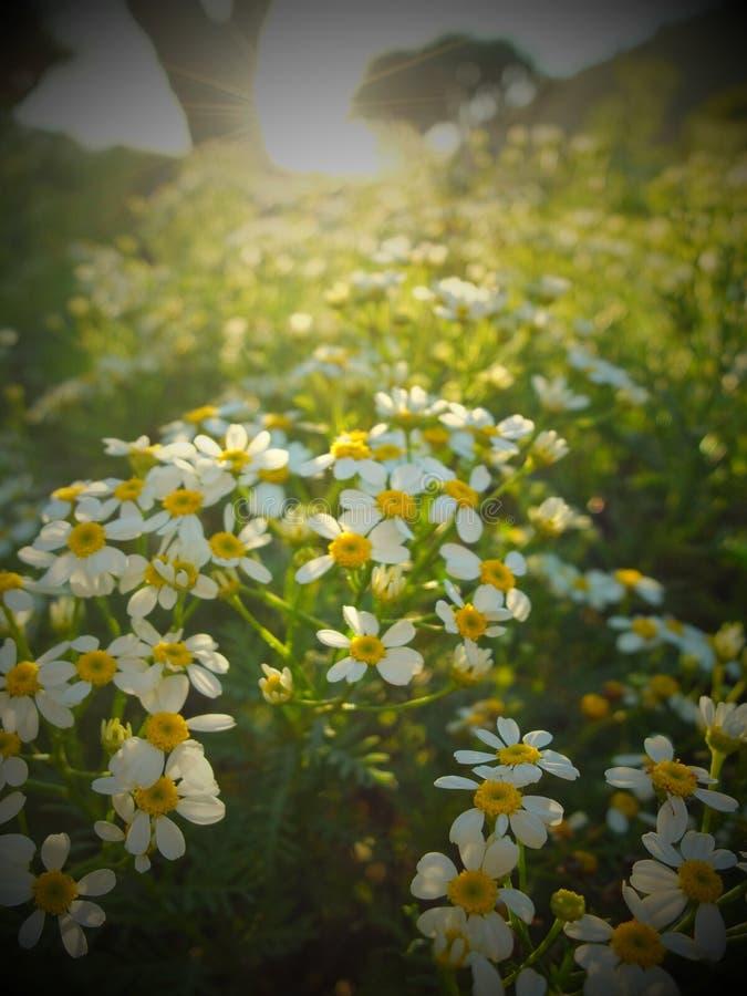 Flowerfield in zonneschijn royalty-vrije stock foto's