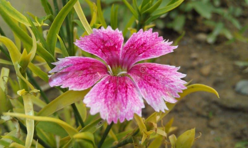 FlowerForYou lizenzfreie stockbilder