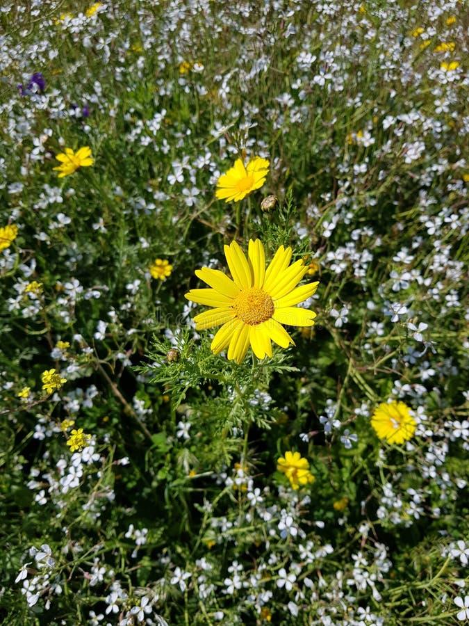 Flowergarden zdjęcia stock