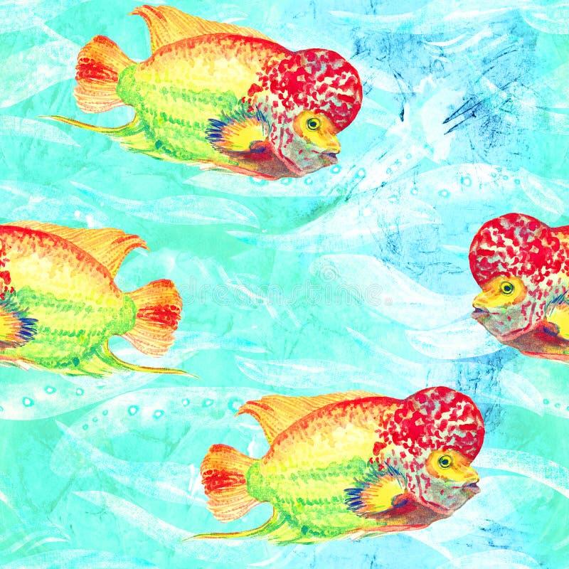 Flowerhorn丽鱼科鱼鱼手画水彩例证,绿松石海洋表面上的无缝的样式有波浪背景 向量例证