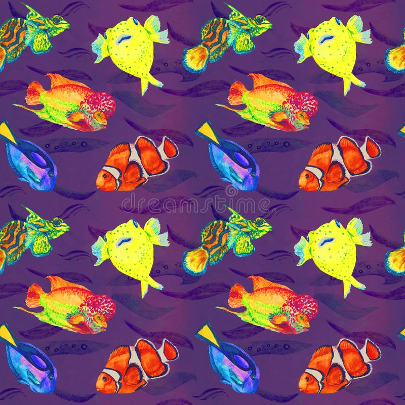 Flowerhorn cichlid fish, Pufferfish, Clownfish, Mandarin fish, Paracanthurus hepatus, hand painted watercolor seamless pattern. Flowerhorn cichlid fish royalty free illustration