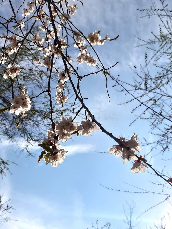 Flowering Branch Photo Sunlight Blue Sky Clouds Sun New