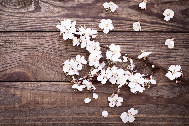 Flowering branch with white delicate flowers on wooden surface. royalty free stock images