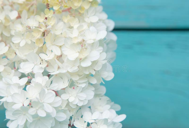 Flowering branch of white spirea on old boards of turquoise color. Place for text. Card design stock photography