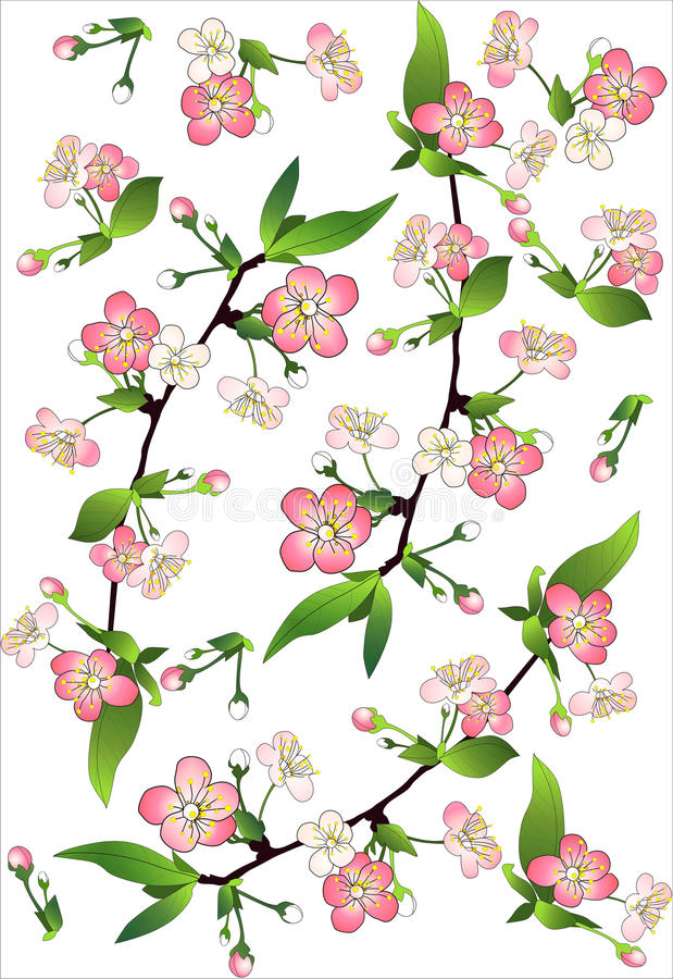 Flowering branches of apple trees royalty free illustration