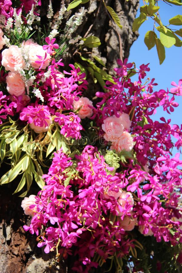 Flowering Pink And Purple Orchid With Flowers And Blue Sky stock photo