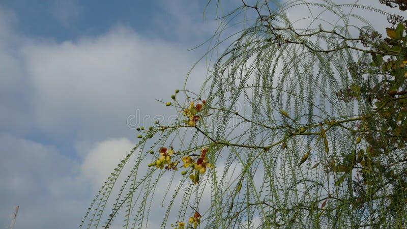 Flowering bush royalty free stock photo