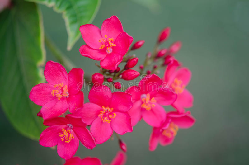 Flowering bushes with pink flowers stock photo image of botany download flowering bushes with pink flowers stock photo image of botany resorts 89363146 mightylinksfo
