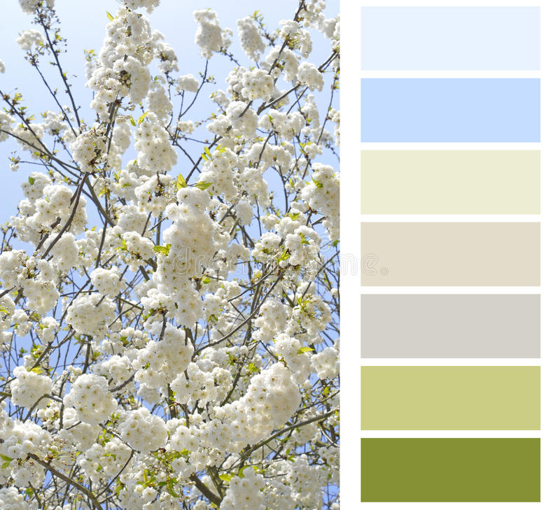 Flowering color chart. Palette swatches stock photography