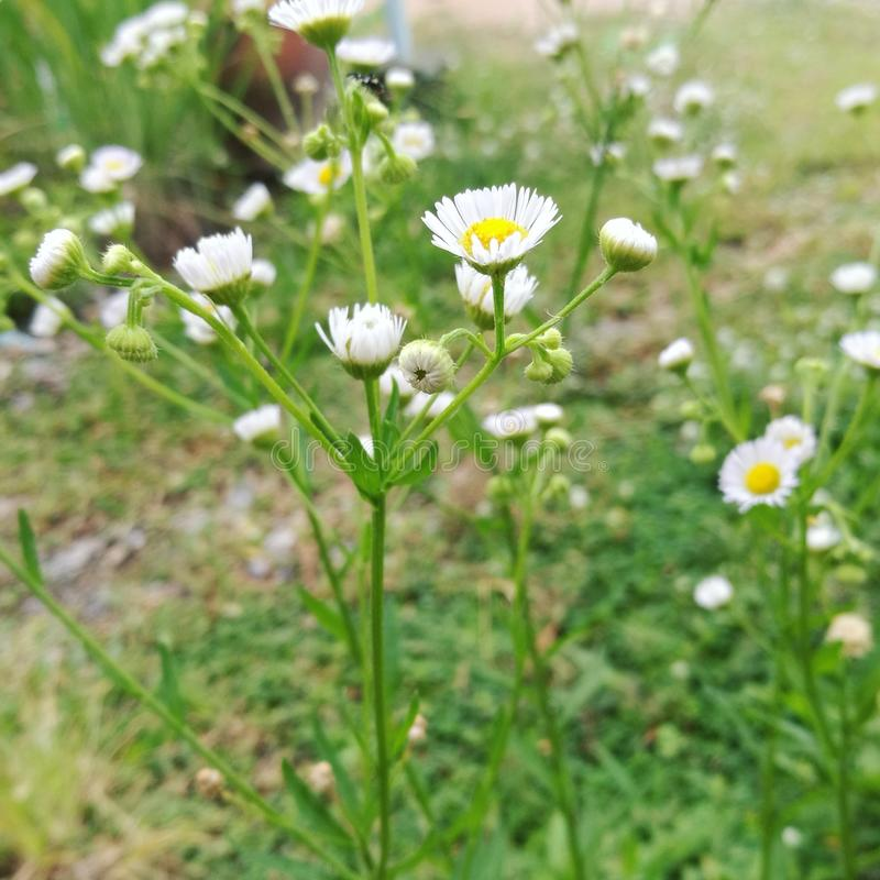 Flowering grass stock image