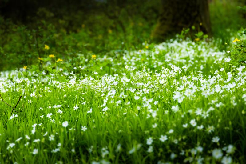 Flowering green forest, spring nature background stock photography