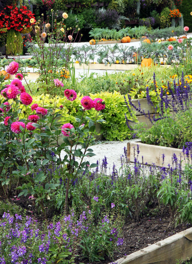 Flowering high beds with vegetables and autumn flowers royalty free stock images