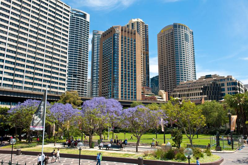 Flowering Jacaranda mimosifolia trees in front of Central Business District, Sydney. royalty free stock photography