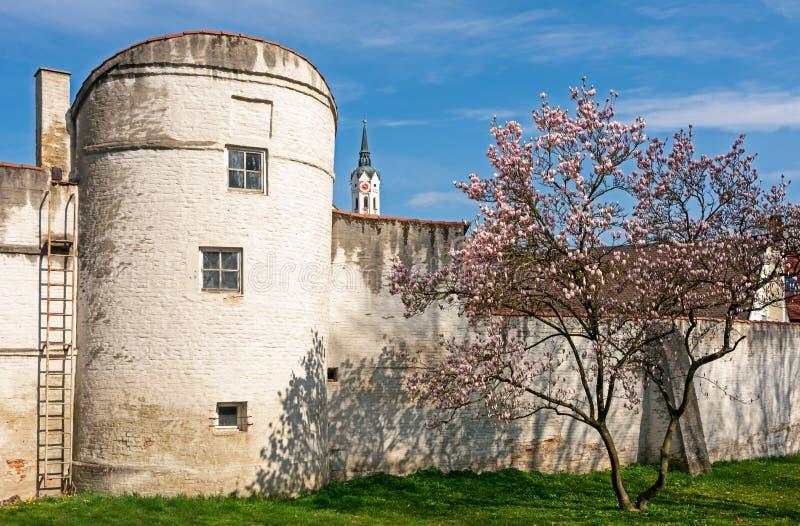 Flowering magnolia tree at the historic city wall of Schrobenhausen. Bavaria, Germany stock photo