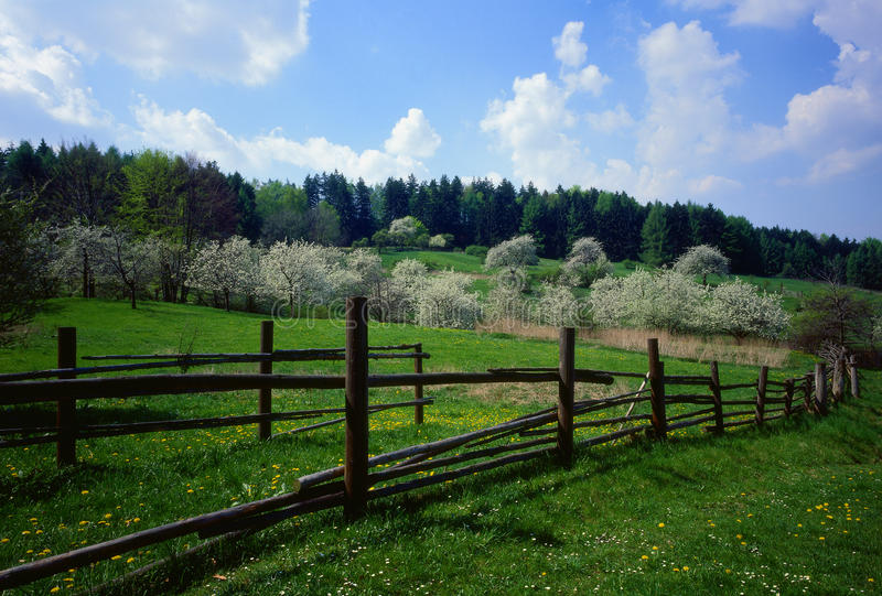Flowering orchard of fence