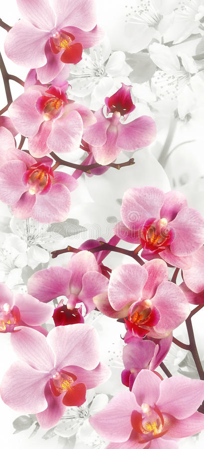 Flowering Orchids and Cherries decoration royalty free stock image