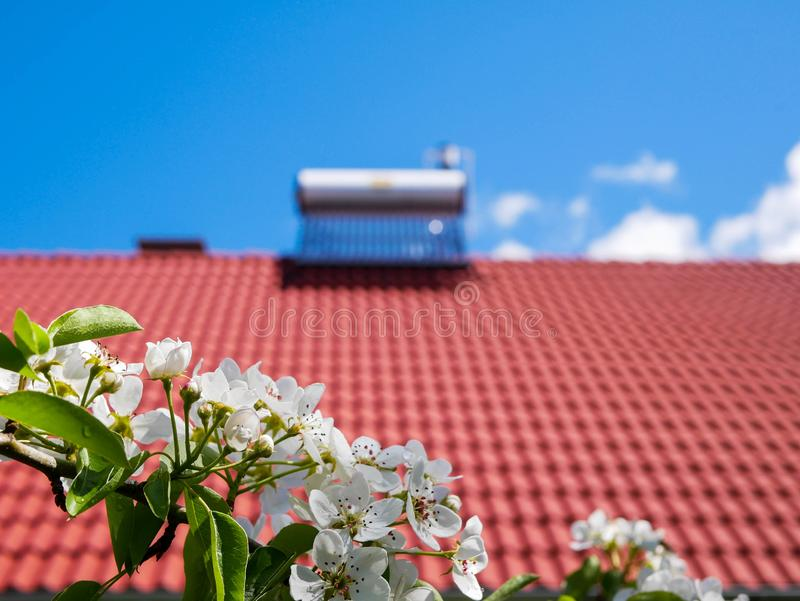 Flowering pear tree branch on focus, solar water heater boiler on rooftop in background. Conceptual green house image royalty free stock photography