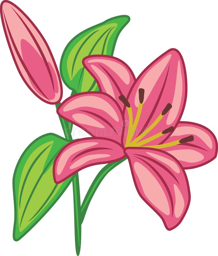 Flowering pink lily royalty free stock images