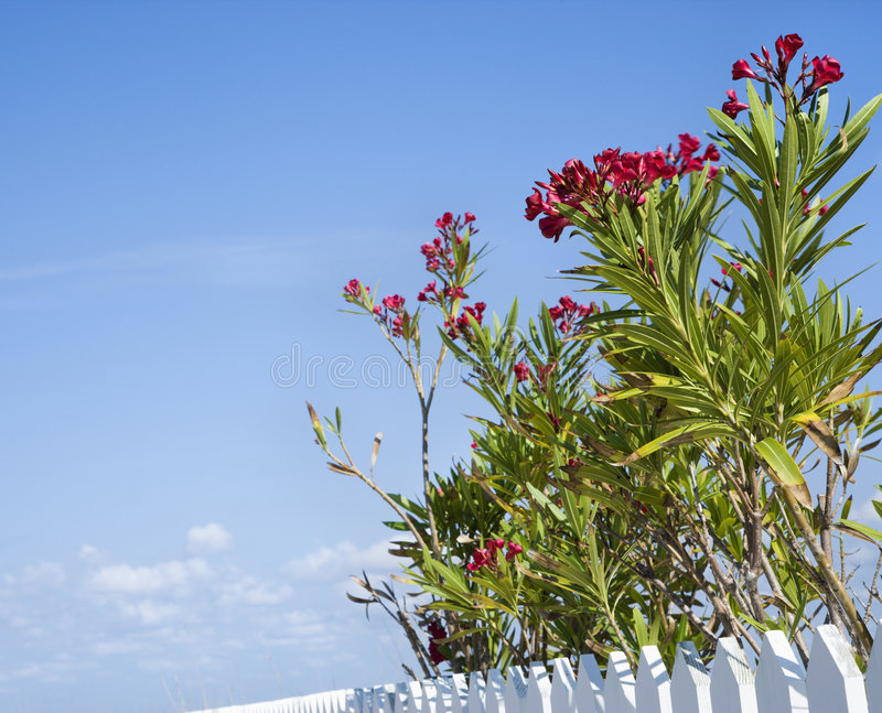Download Flowering Plants. Royalty Free Stock Images - Image: 3422249