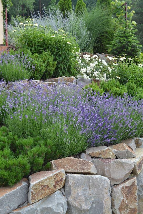 Rock garden. Flowering rock garden in summer royalty free stock photo