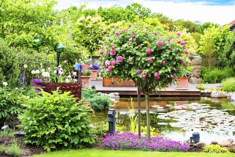 Flowering rosebush in beautiful garden with pond stock photos
