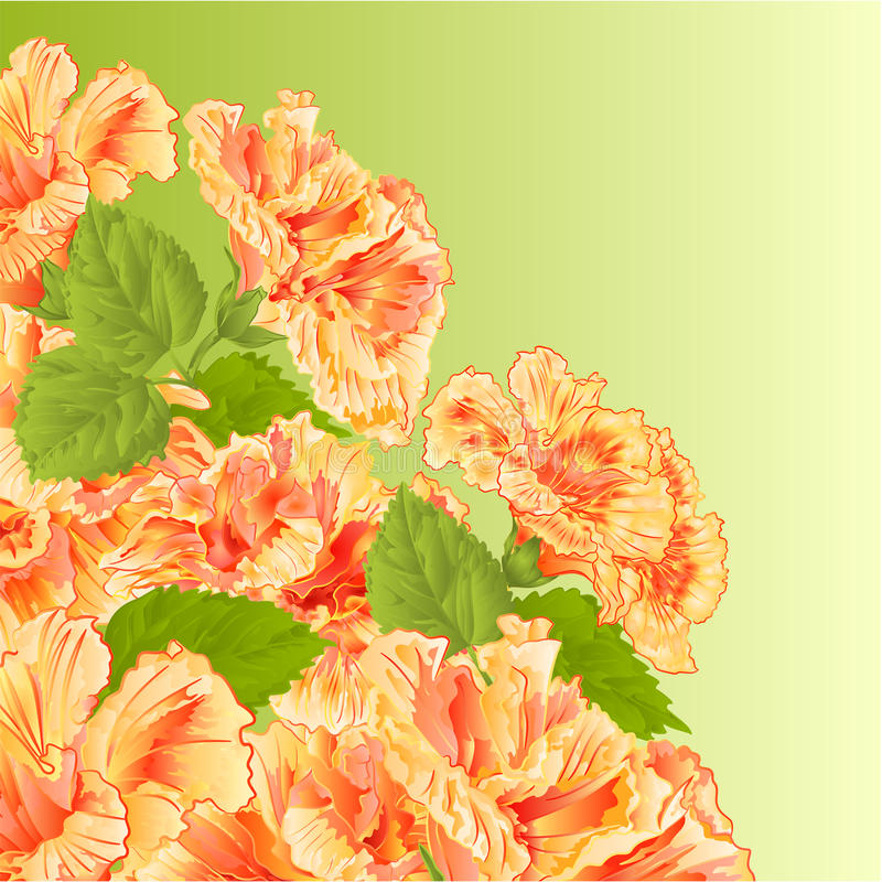 Flowering shrub yellow hibiscus vector royalty free illustration