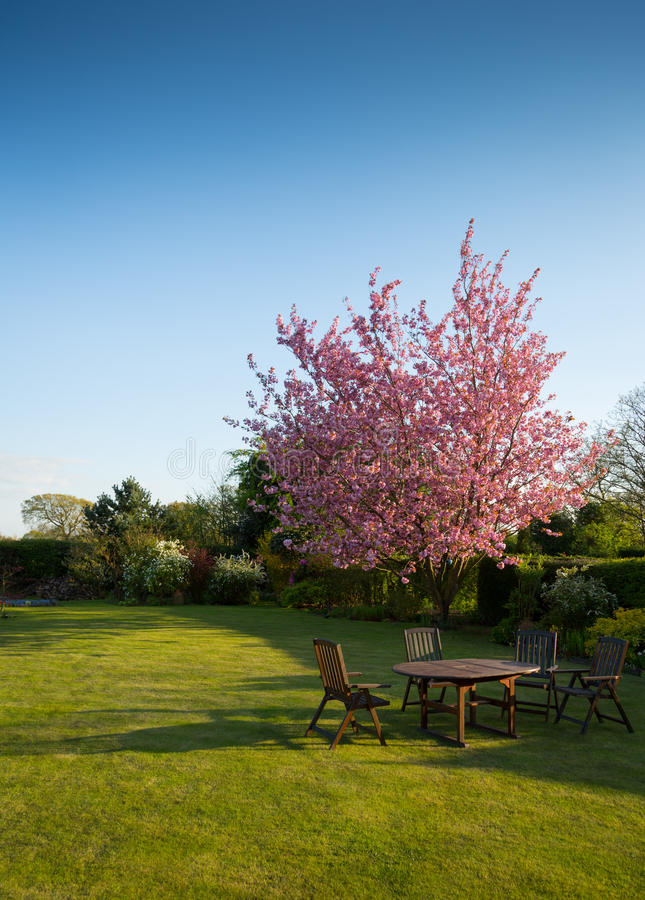 Flowering tree in garden royalty free stock images